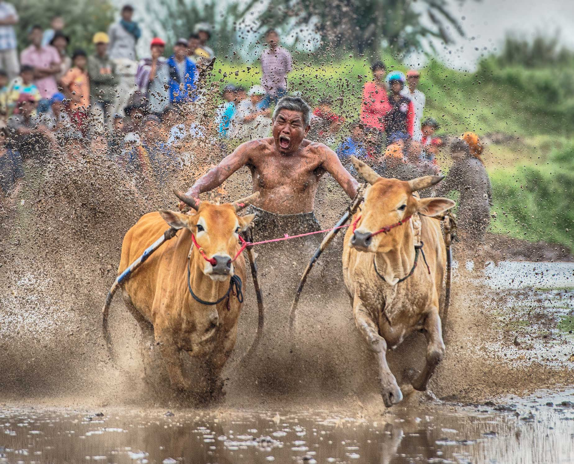Bull Racer 2, West Sumatra, Indonesia