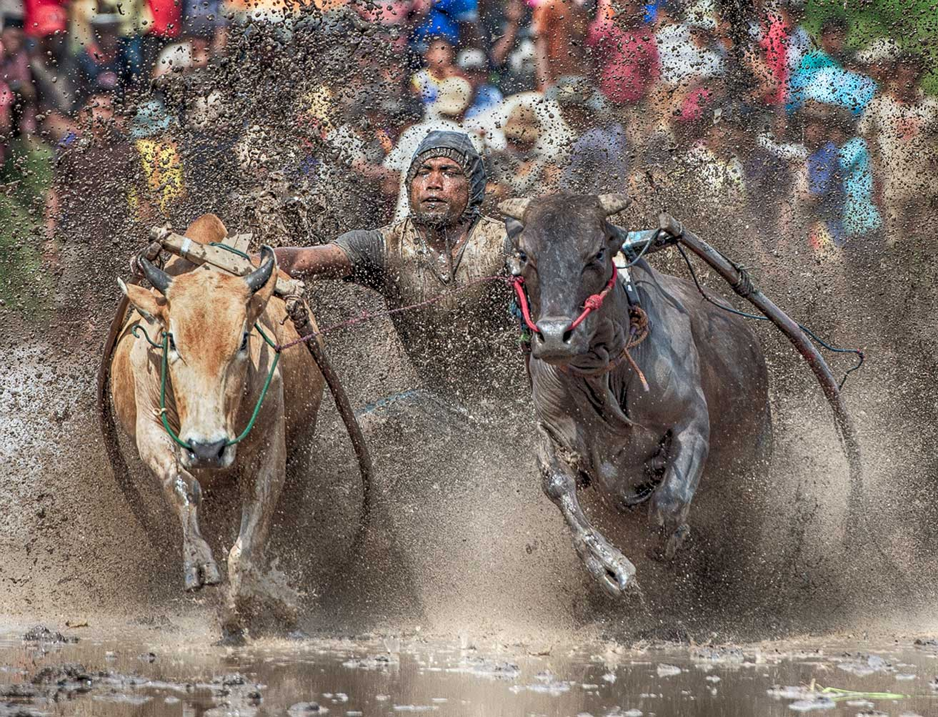 Bull Racer 3, West Sumatra, Indonesia