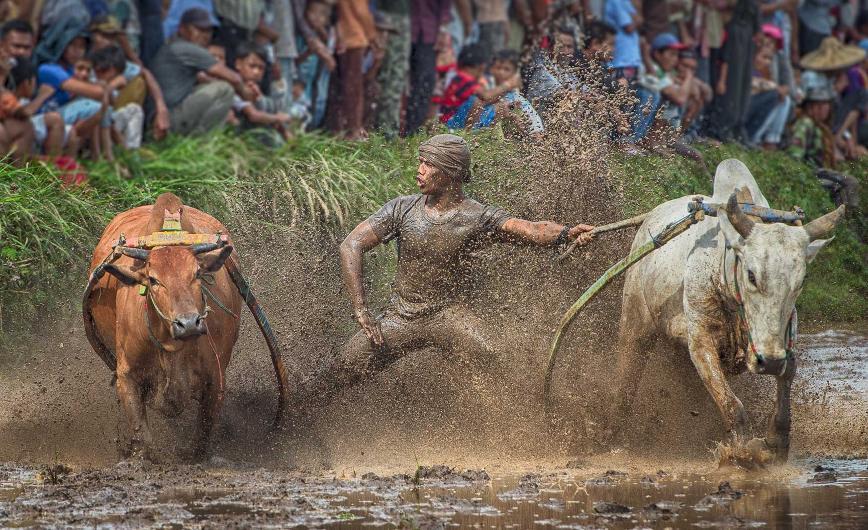 Bull Racer 4, West Sumatra, Indonesia