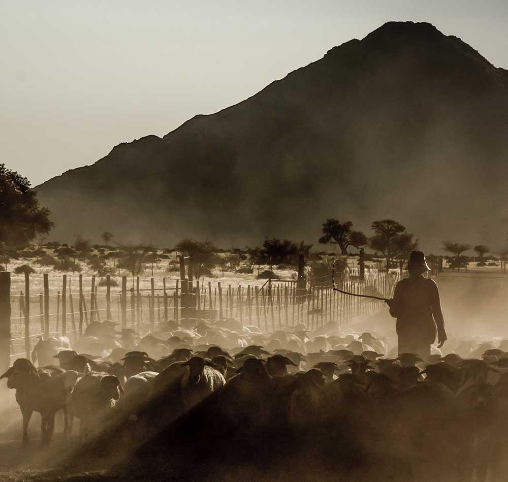 Goat Herder, Namibia