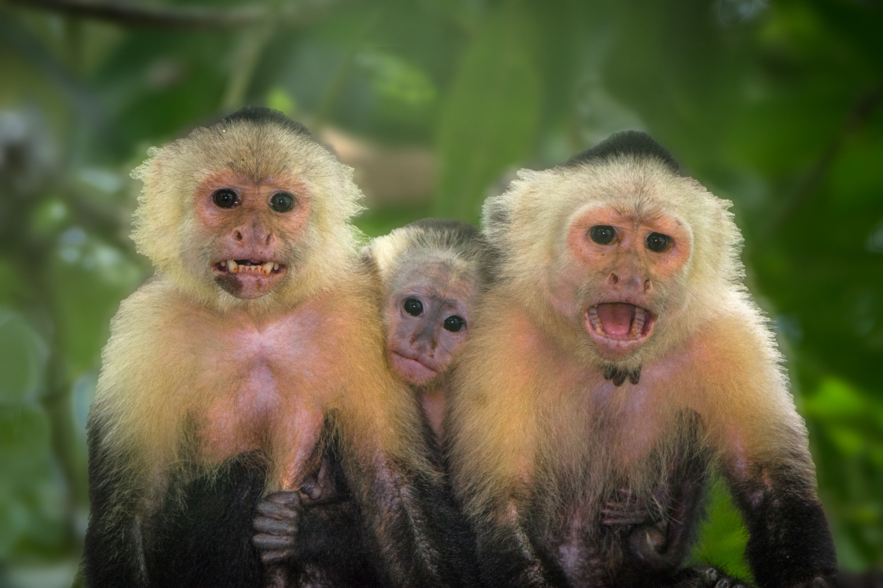 Happy Family, Osa Peninsula, Costa Rica