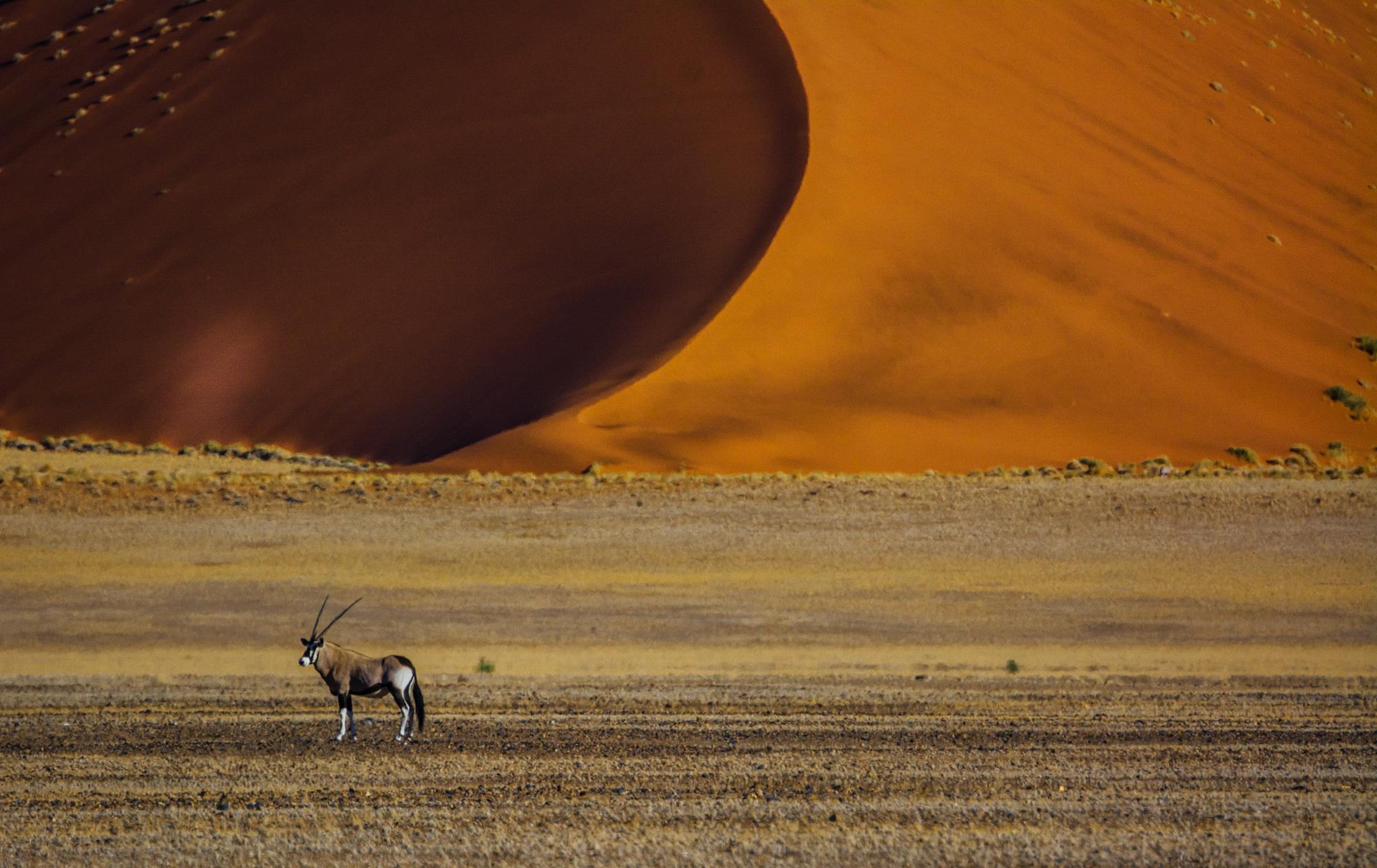 One Oryx, One Dune, Namibia