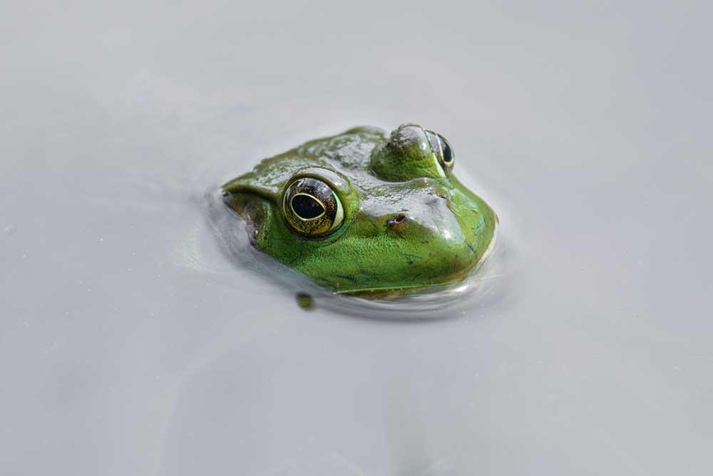 Green Swimmer