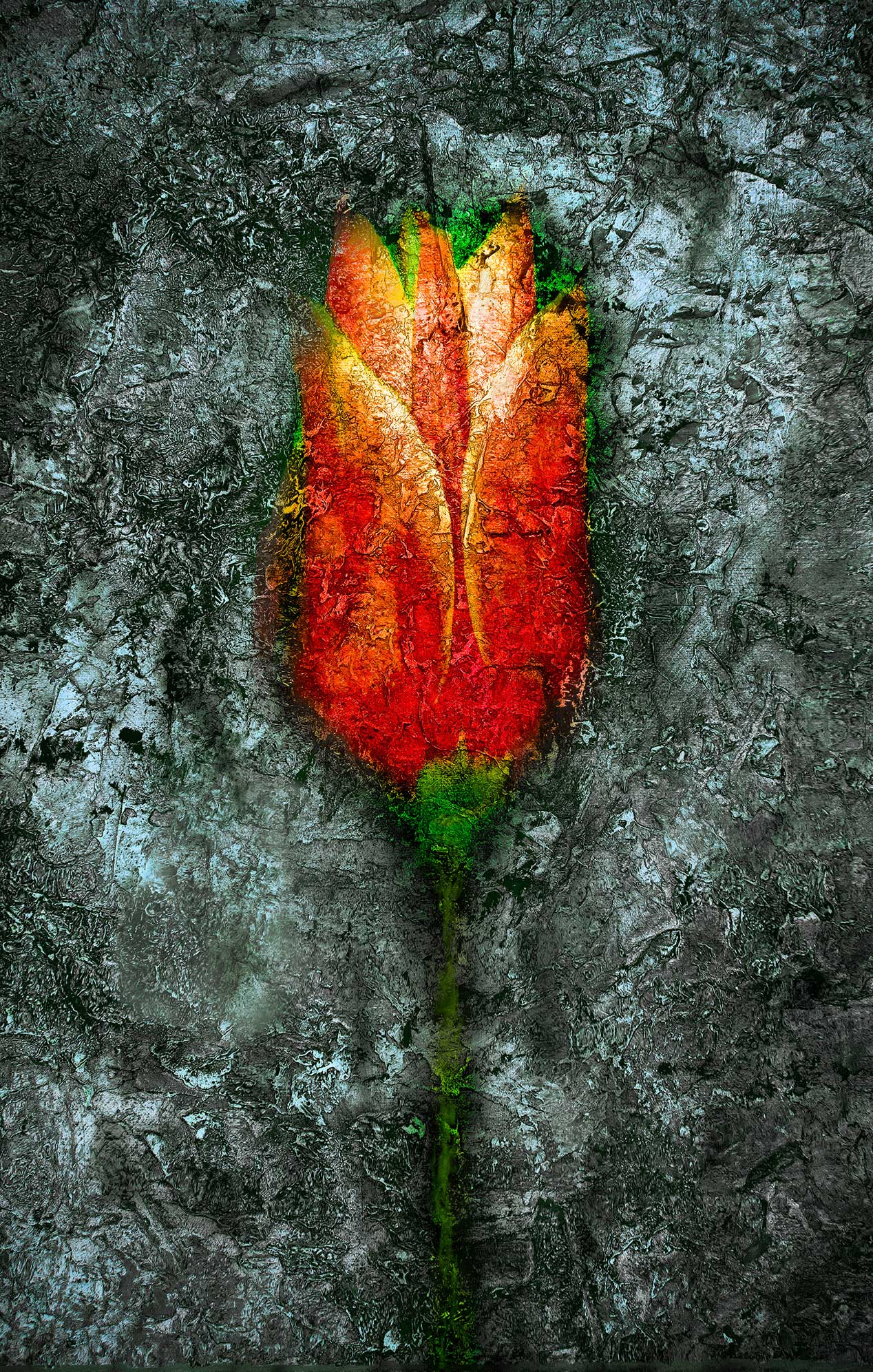 Cracked Tulip