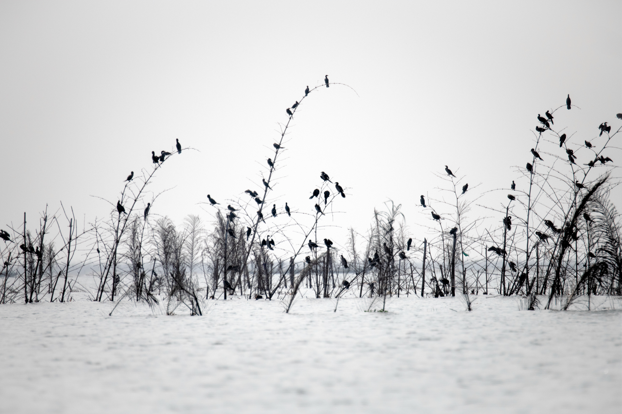 Water Birds, near Cotonou, Benin