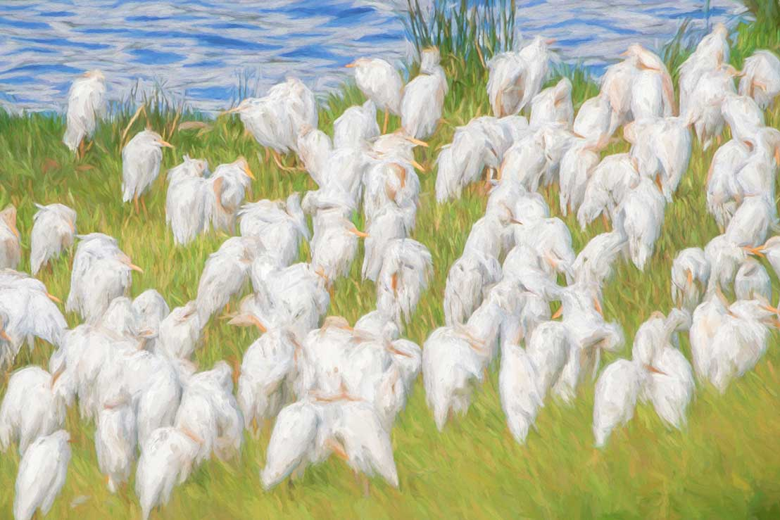 Painted Storks, Tanzania